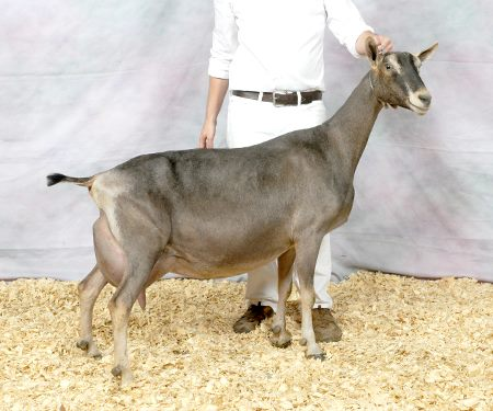 GRAND CHAMPION CHERRY GLEN GENTRY GRANITE