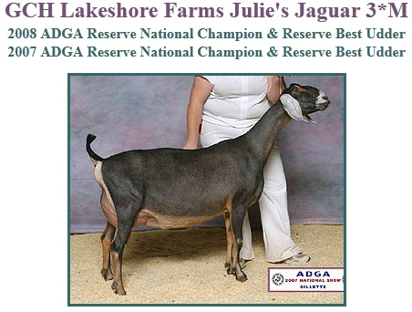 GCH Lakeshore Farms Julie`s Jaguar 3*M